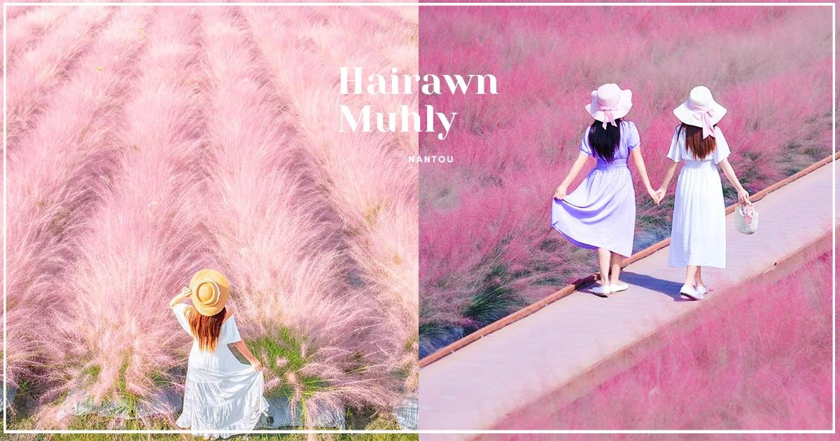 【南投】是童話裡的場景! 免出國就有「粉黛亂子草」可以拍 浪漫「嫩粉花海」限定登場♡